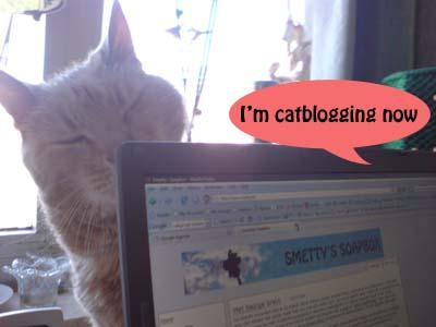 A comic cat comic 1